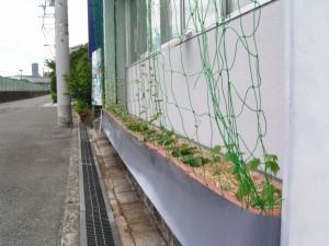農民会館前グリーンカーテン